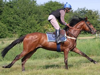 Action from the gallops on the eve of resumption